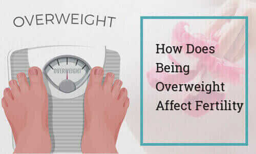 How does being Overweight affect Fertility
